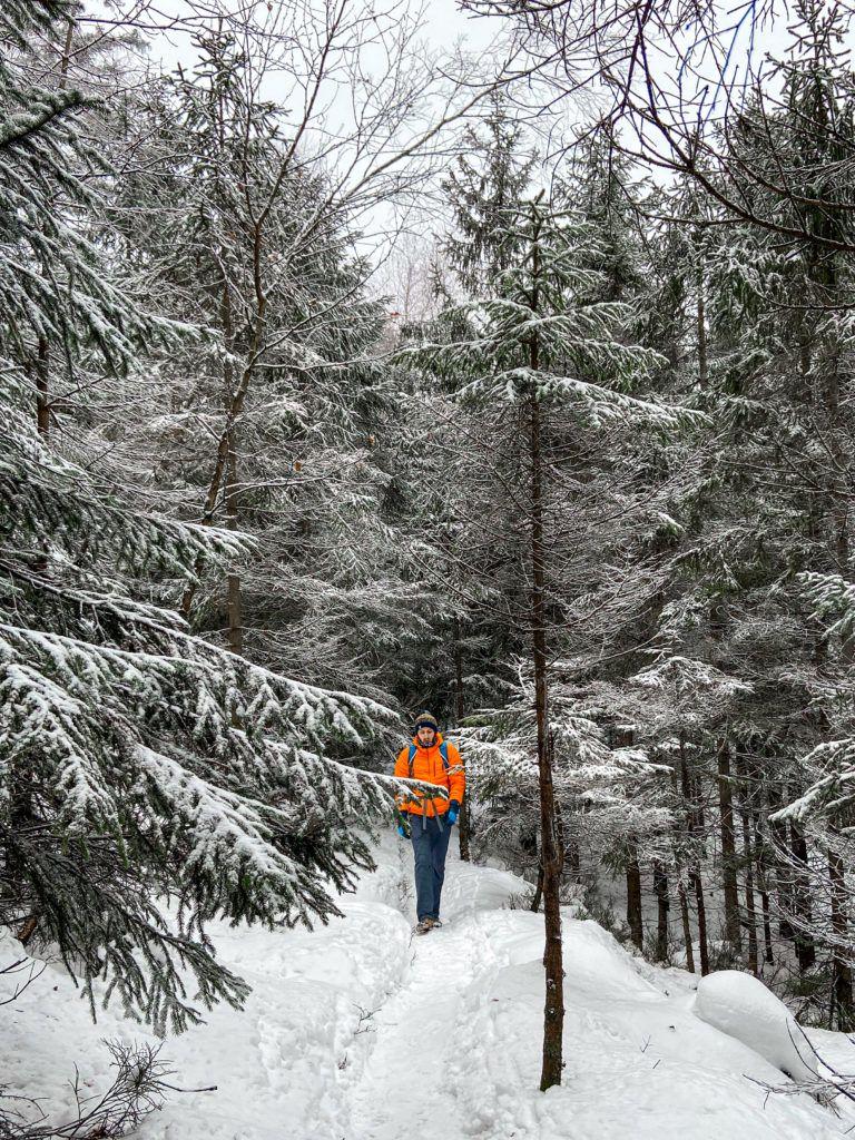 Szlak z Białych Skał w kierunku Skał Puchacza prowadzi ścieżką przez las.
